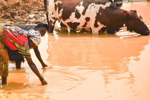 Two elderly women get water from a muddy river in Angola. A cow stands behind them