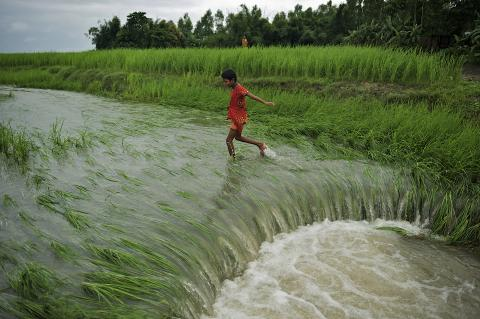 A paddy field is inundated after flooding at Astomir Char of Kurigram's Chilmari Upazila