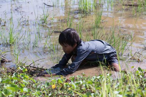 Since early morning, Vy, 12 years old, collects snails with his mother.