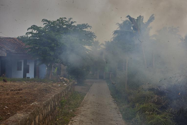 Burning grass and trees in Jakarta