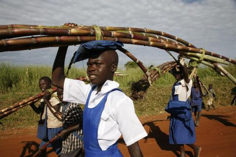 Girls carry sugar cane to school, where they will sell it to help pay for their education, at a settlement for those displaced by conflict, in the northern Gulu District.