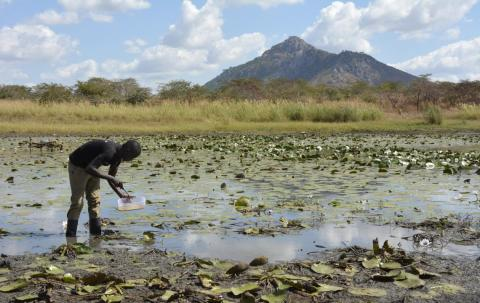 UNICEF Innovation Intern Patrick Kalonde helps collect water samples from the lake, to check for mosquito larvae.