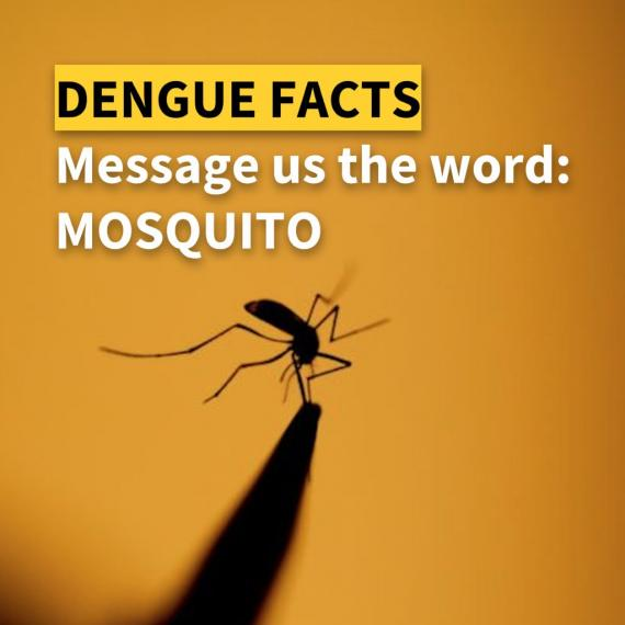 U-Report: Message the word DENGUE to receive information