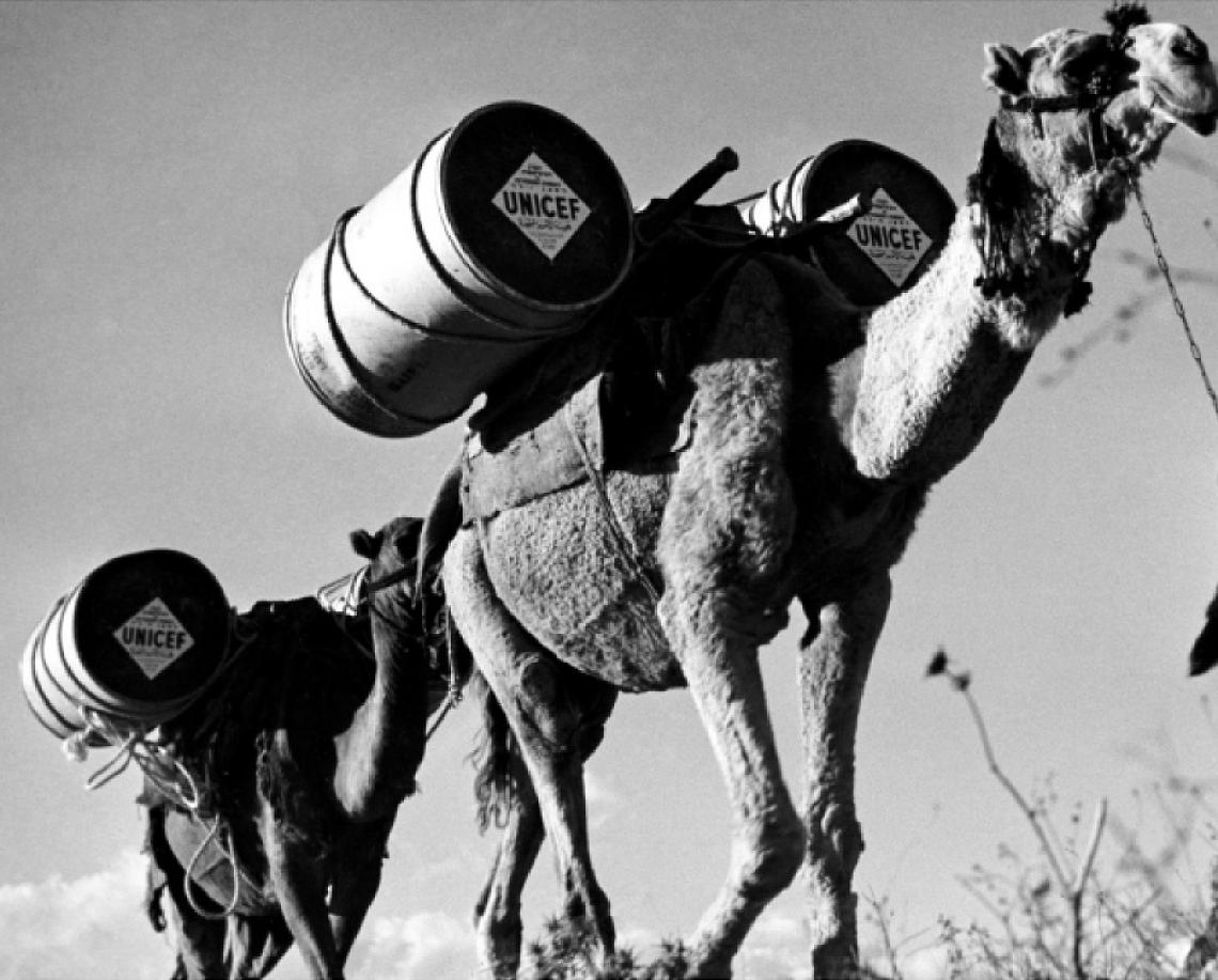 Camels carrying metal drums filled with UNICEF food supplies in 1954
