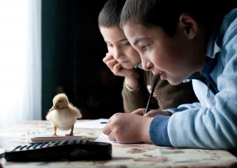 news, multimedia resources and expert commentaries on children's issues and UNICEF's work in Romania