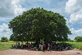 A group of people gather under a tree, South Sudan