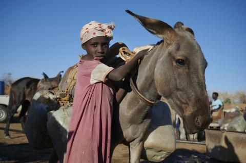 A child stands next to a mule.