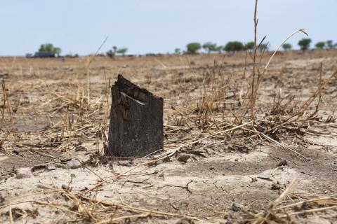 South Sudan. Pole stumps where Ogweni primary school used to be.