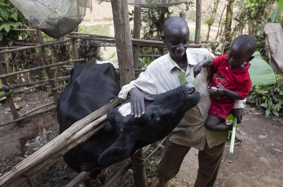 As he introduces Kevin to his family's cow outside their home, Christophe notes that his family and economic life has changed considerably since the introduction of the early childhood development centre.