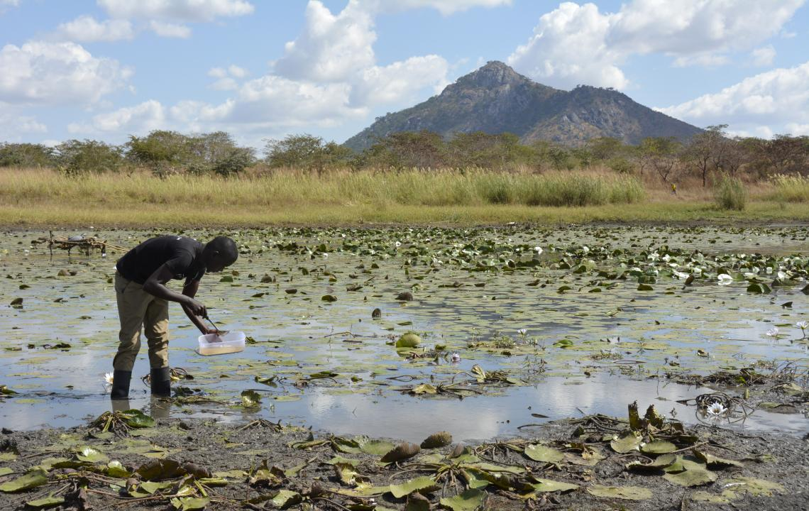 A man collects samples from a swampy area, Malawi