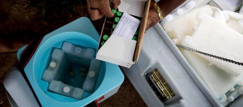 Polio vaccinators from the Papua New Guinea Department of Health put vaccines into a cold storage container, in March 2019.