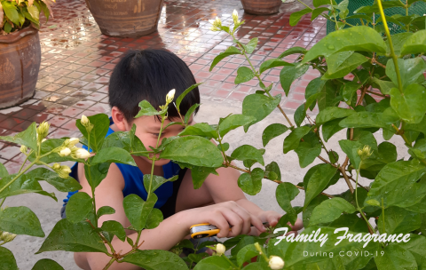 A young boy is pruning a plant